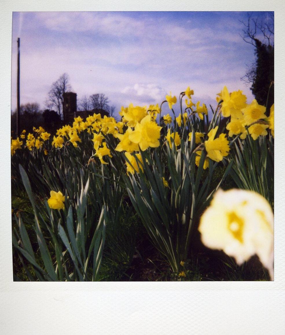 Photolove - Daffodils